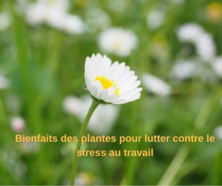 Bienfaits des plantes pour lutter contre le stress au travail